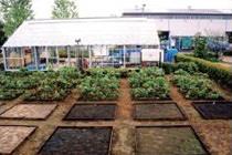 実験圃場と温室