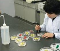 早期発芽力検定法による品質検査
