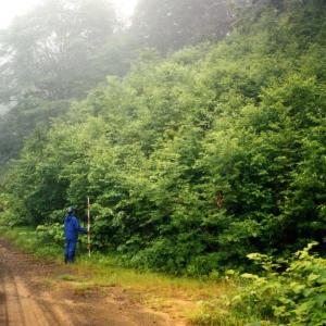 国立公園内道路法面緑化工事